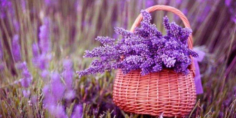 Ці рослини в спальні благотворно впливають на хороший сон