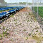 [:ru]База Металлиста заросла травой и грибами[:uk]База Металіста заросла травою і грибами[:]
