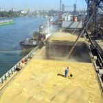 Объем экспорта зерновых культур в апреле вырос почти на треть