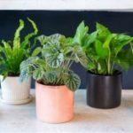 [:ru]Список растений, которые помогут побороть бессоницу[:uk]Список рослин, які допоможуть побороти безсоння[:]
