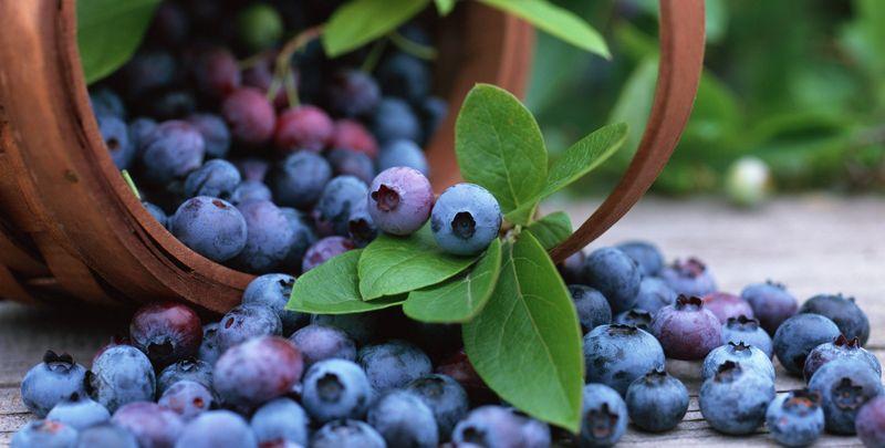 Названа найкраща ягода для омолодження організму