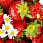 Эта ягода замедляет старение организма