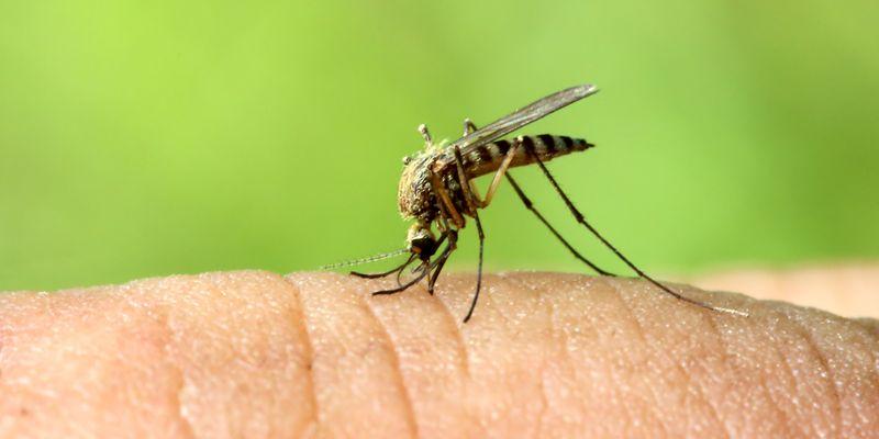 7 натуральных средств против укусов комаров