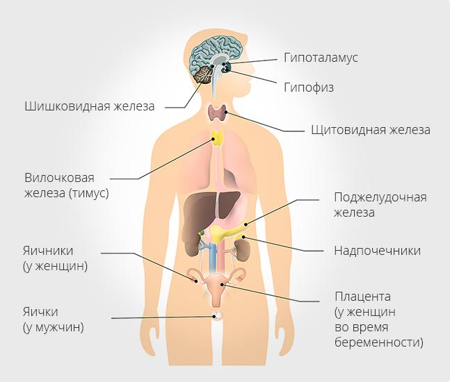 Эндокринные патологии – болезнь 21 века