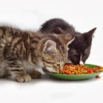 Необхідні кошти і товари для котів у Києві від онлайн-магазину dambo.com.ua