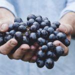 Українські винороби прагнуть відмовитися від імпортного винограду