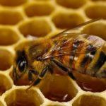 Україна встановила новий рекорд з експорту меду