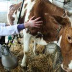 У населення закупили майже на 2% більше молока за 9 місяців минулого року