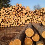 [:ru]Рада отменила мораторий на экспорт лесоматериалов[:uk]Рада скасувала мораторій на експорт лісоматеріалів[:]