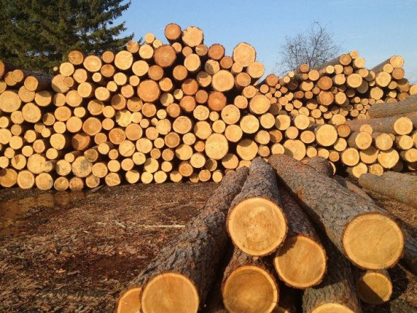 Рада отменила мораторий на экспорт лесоматериалов