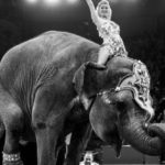 [:ru]Cвободу от страданий ей принесла лишь смерть. Слониха Майя, которая выступала в украинских цирках,  умерла на гастролях — зоозащитники[:uk]Свободу від страждань їй принесла лише смерть. Слониха Майя, яка виступала в українських цирках, померла на гастролях — зоозахисники[:]
