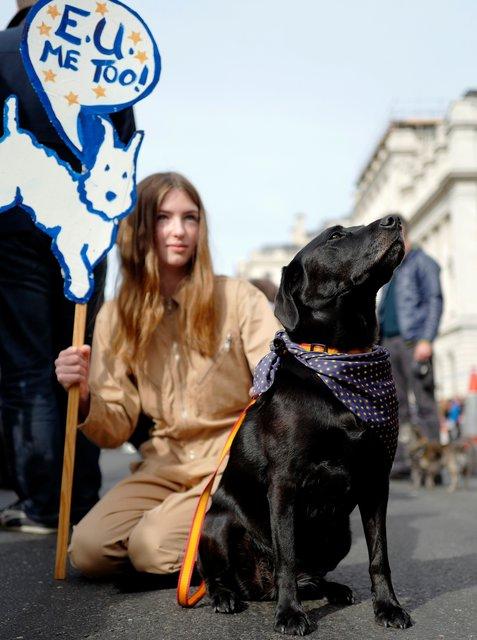 "В Лондоне собаки ""вышли"" на протест против Brexit"