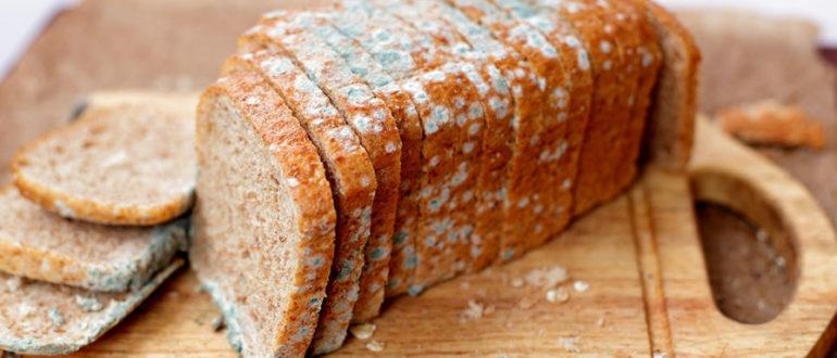 Как влияет на человека плесень на хлебе