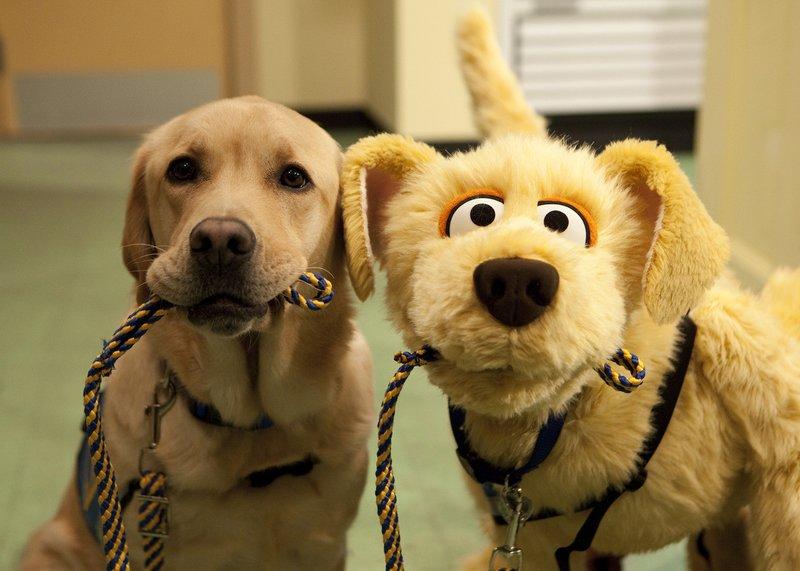 Смешные картинки, смешные картинки собак и их фото