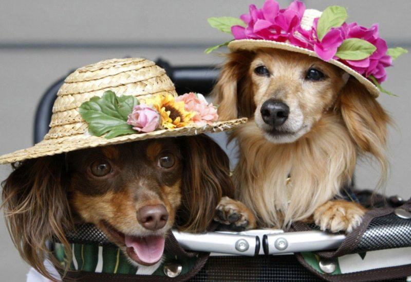 Днем стандартизации, смешные картинки и фото с собаками