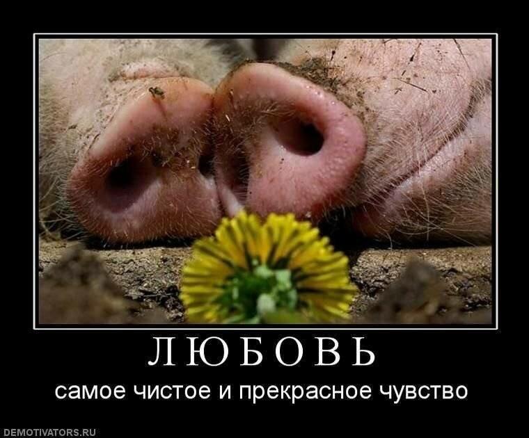 Поздравительную, приколы про любовь картинки на русском