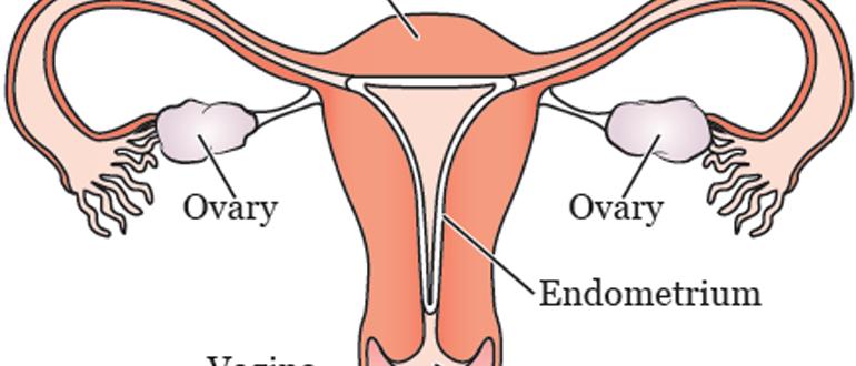Для чего хранят ткань яичника