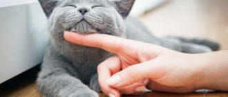 Серьезные ошибки в уходе за котами, которые делают все владельцы