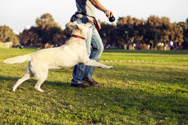 Вы не уделяете должного внимания активности собаки