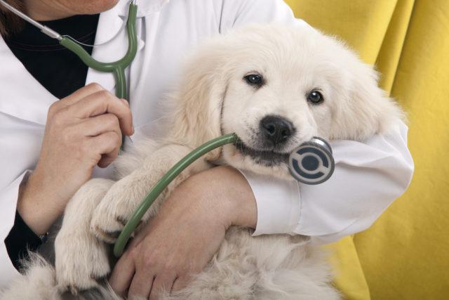 Вы не водите собаку к ветеринару