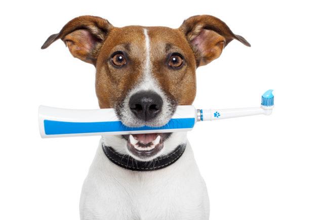 Вы не уделяете внимание здоровью зубов пса